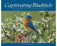 Captivating Bluebirds-AP30730