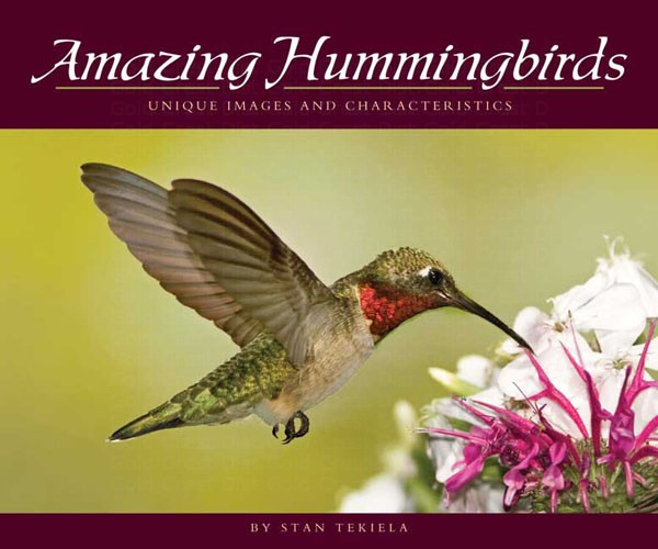 Amazing Hummingbirds AP32468'