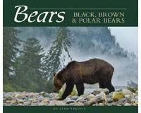 Bears-AP33786