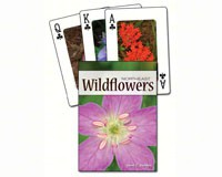 Wildflowers of the Northeast Playing Cards-AP33946