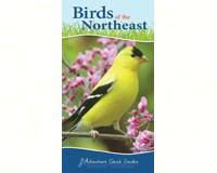 Birds of the Northeast Quick Guide-AP34073