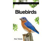 Bluebirds-AP36879
