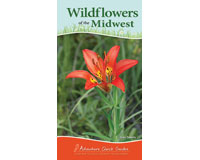 Wildflowers of Midwest Quick Guide-AP37036