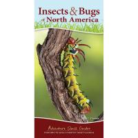 Insects & Bugs of North America-AP38187