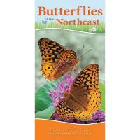 Butterflies of the Northeast-AP38262