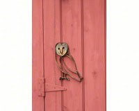 Barn Owl Wall Mount-ANCIENTAG10242
