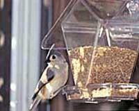 Window Cafe Hopper-ASPECTS155