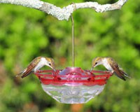 HummBlossom 4 oz Feeder Rose Color-ASPECTS433