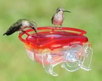The Gem Window Hummingbird Feeder-ASPECTS437