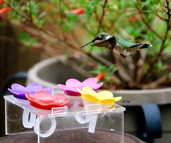 Plastic Trainer for Hummer Rings