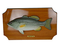 18 inch Bass Wall Plaque-BRUSHWPBASS18