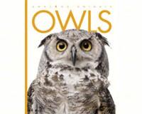 Amazing Animals Owls-CB9780898127904