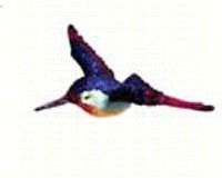 Hummingbird Window Magnet-CC52001