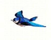 Blue Jay Window Magnet-CC52008