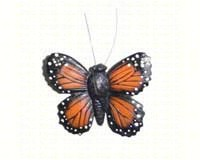 Monarch Butterfly-CC52017