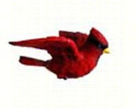 Cardinal Window Magnet-CC52020