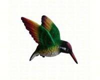 Rainbow Hummingbird-CC52039