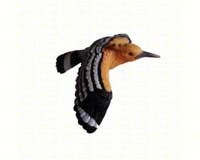 Woodpecker-CC52044