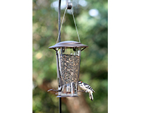 Squirrel-Proof X-2 Seed Feeder-CLASSIC12