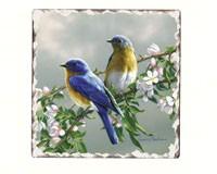 Bluebird Number 1 Single Tumbled Tile Coaster-CART11078
