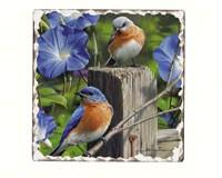 Bluebirds Number 3 Single Tumbled Tile Coaster-CART11180