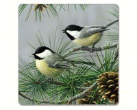 Beautiful Songbirds Hardboard Coaster-CART11280