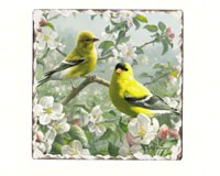 Goldfinches Number 1 Single Tumbled Tile Coaster-CART11295