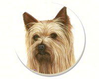Yorkshire Terrier Coasters Set of 4-CART87329