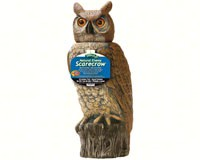 Owl with Rotating Head-DALENRHO4