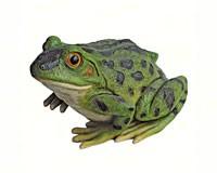 Bull Frog Statue-DTQM20510