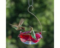 Ruby Sipper Hummingbird Feeder Clear-DYRS3HC