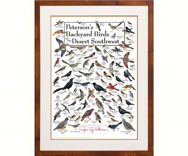 Peterson's Backyard Birds of the Desert SW Poster