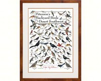 Peterson's Backyard Birds of the Desert SW Poster-LEWERSBBDPT132