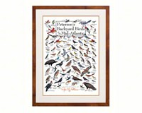 Peterson's Backyard Birds of Mid-Atlantic Poster-LEWERSBBMPT004