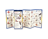 Sibley's Backyard Birds of the Northeast-LEWERSBBN108