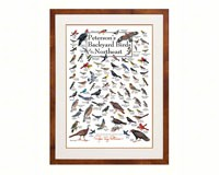 Peterson's Backyard Birds of the Northeast Poster-LEWERSBBNPT003