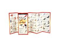 Sibley's Backyard Birds Southeast-LEWERSBBS110