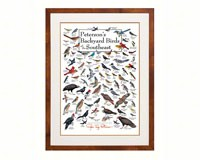 Peterson's Backyard Birds of Southeast Poster-LEWERSBBSPT005