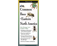 Common Bees of Eastern North America Folding Guide by Joseph S. Wilson & Olivia Messinger Carril-LEWERSBEN113