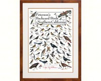 Peterson's Backyard Birds of Northern California Poster-LEWERSBNCPT130