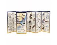 Birds New England Coast-LEWERSBNE154
