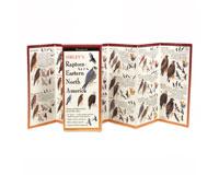 Sibley's Raptors Eastern North America-LEWERSBOP115