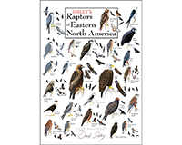 Sibley's Raptors of Eastern North America Poster-LEWERSBOPPT284