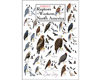 Sibley's Raptors of Western North America Poster-LEWERSBPWPT285
