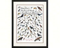 Peterson's Backyard Birds of Southern California Poster-LEWERSBSCPT131