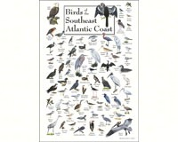 Birds of the Southeast Atlantic Coast Poster-LEWERSBSPT138