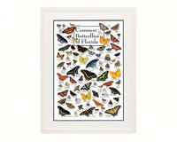 Common Butterflies of Florida Poster-LEWERSBUFPT104