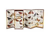 Common Butterflies of the Northeast-LEWERSBUN103