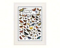 Common Butterflies of New England Poster-LEWERSBUNPT106