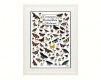 Common Butterflies of Midwest Poster-LEWERSBUUPT162